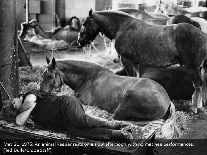 May 21, 1975: An animal keeper rests on a slow afternoon with no matinee performances. (Ted Dully/Globe Staff)