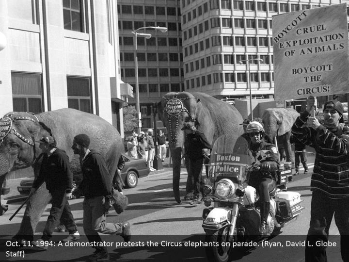 Oct. 11, 1994: A demonstrator protests the Circus elephants on parade. (Ryan, David L. Globe Staff)