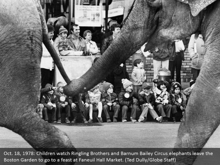 Oct. 18, 1978: Children watch Ringling Brothers and Barnum Bailey Circus elephants leave the Boston Garden to go to a feast at Faneuil Hall Market. (Ted Dully/Globe Staff)