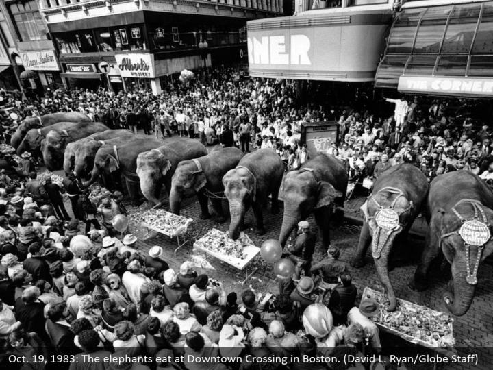 Oct. 19, 1983: The elephants eat at Downtown Crossing in Boston. (David L. Ryan/Globe Staff)