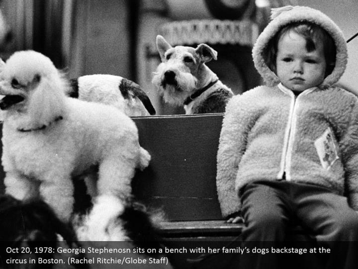 Oct 20, 1978: Georgia Stephenosn sits on a bench with her family's dogs backstage at the circus in Boston. (Rachel Ritchie/Globe Staff)