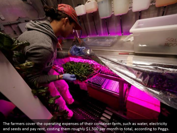 The farmers cover the operating expenses of their container farm, such as water, electricity and seeds and pay rent, costing them roughly $1,500 per month in total, according to Peggs.