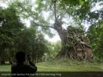 a tourist visits sambor prei kuk reuters samrang