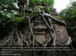roots cover a wall at sambor prei