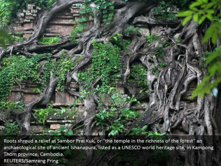 "Roots shroud a relief at Sambor Prei Kuk, or ""the temple in the richness of the forest"" an archaeological site of ancient Ishanapura, listed as a UNESCO world heritage site, in Kampong Thom province, Cambodia.   REUTERS/Samrang Pring"