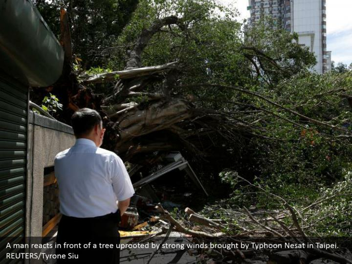 A man reacts in front of a tree uprooted by strong winds brought by Typhoon Nesat in Taipei. REUTERS/Tyrone Siu