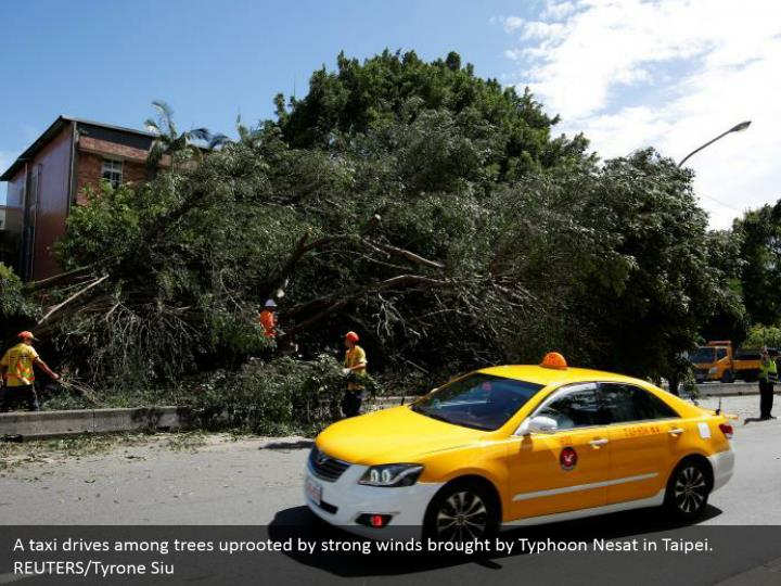 A taxi drives among trees uprooted by strong winds brought by Typhoon Nesat in Taipei. REUTERS/Tyrone Siu