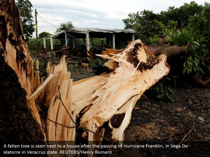 A fallen tree is seen next to a house after the passing of Hurricane Franklin, in Vega De alatorre in Veracruz state. REUTERS/Henry Romero