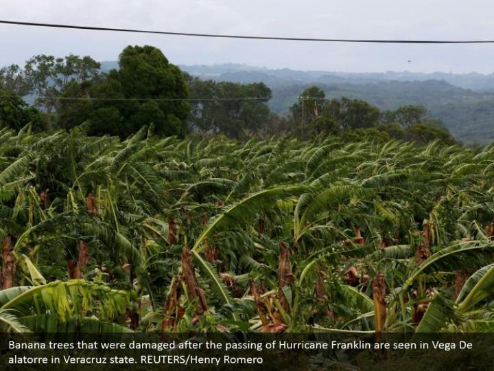 Banana trees that were damaged after the passing of Hurricane Franklin are seen in Vega De alatorre in Veracruz state. REUTERS/Henry Romero