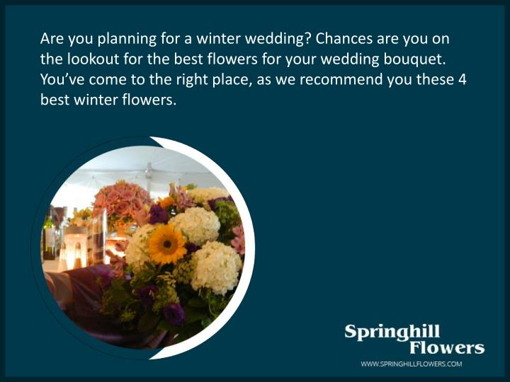 Are you planning for a winter wedding? Chances are you on the lookout for the best flowers for your wedding bouquet. You've come to the right place, as we recommend you these 4 best winter flowers.