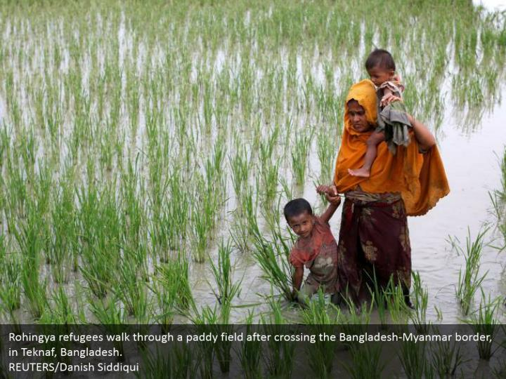 Rohingya refugees walk through a paddy field after crossing the Bangladesh-Myanmar border, in Teknaf, Bangladesh.  REUTERS/Danish Siddiqui