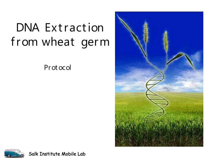 dna extraction from wheat germ n.