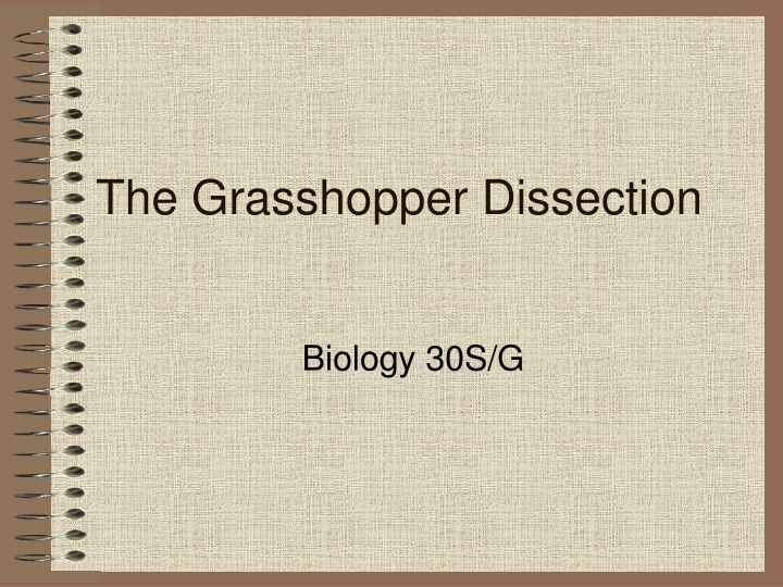 the grasshopper dissection n.