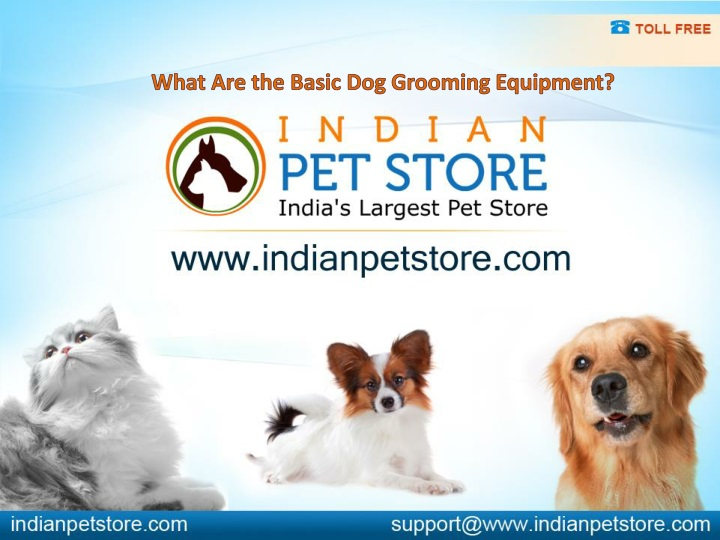 what are the basic dog grooming equipment n.