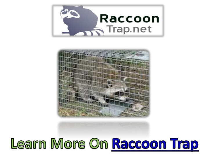 learn more on raccoon trap n.