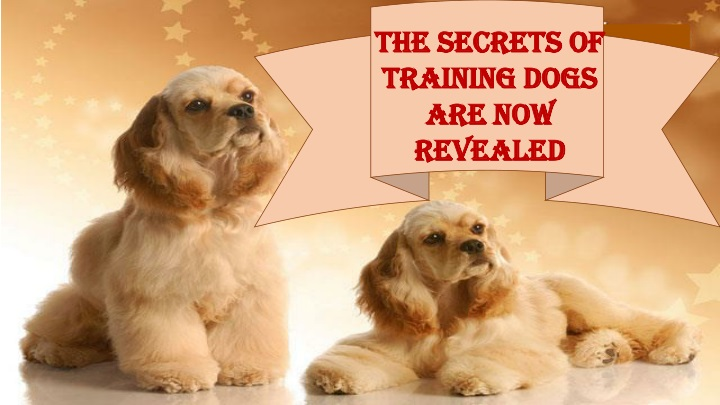 the secrets of training dogs are now revealed n.