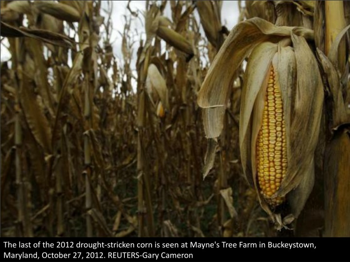 the last of the 2012 drought stricken corn n.