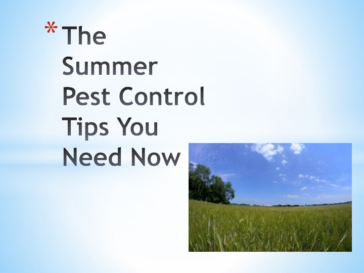 the summer pest control tips you need now n.