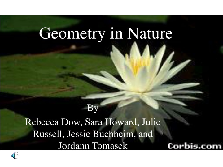 geometry in nature n.