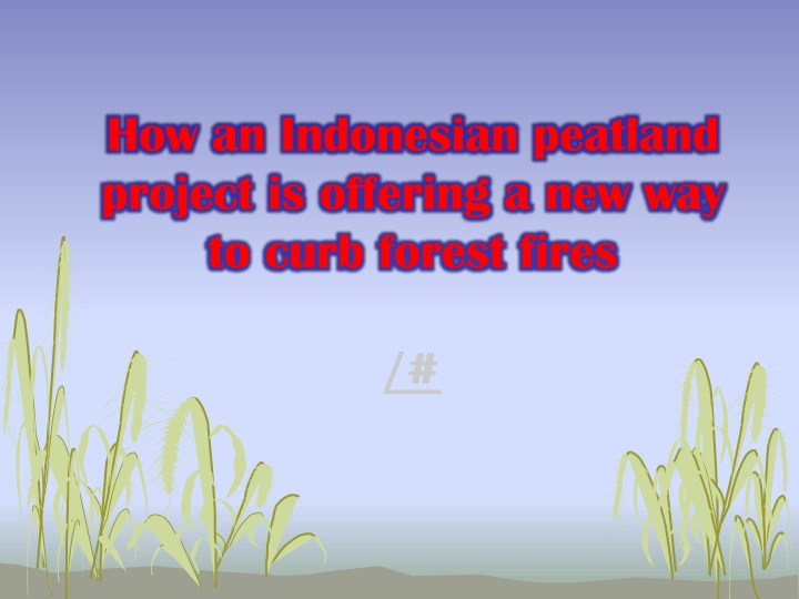how an indonesian peatland project is offering a new way to curb forest fires n.