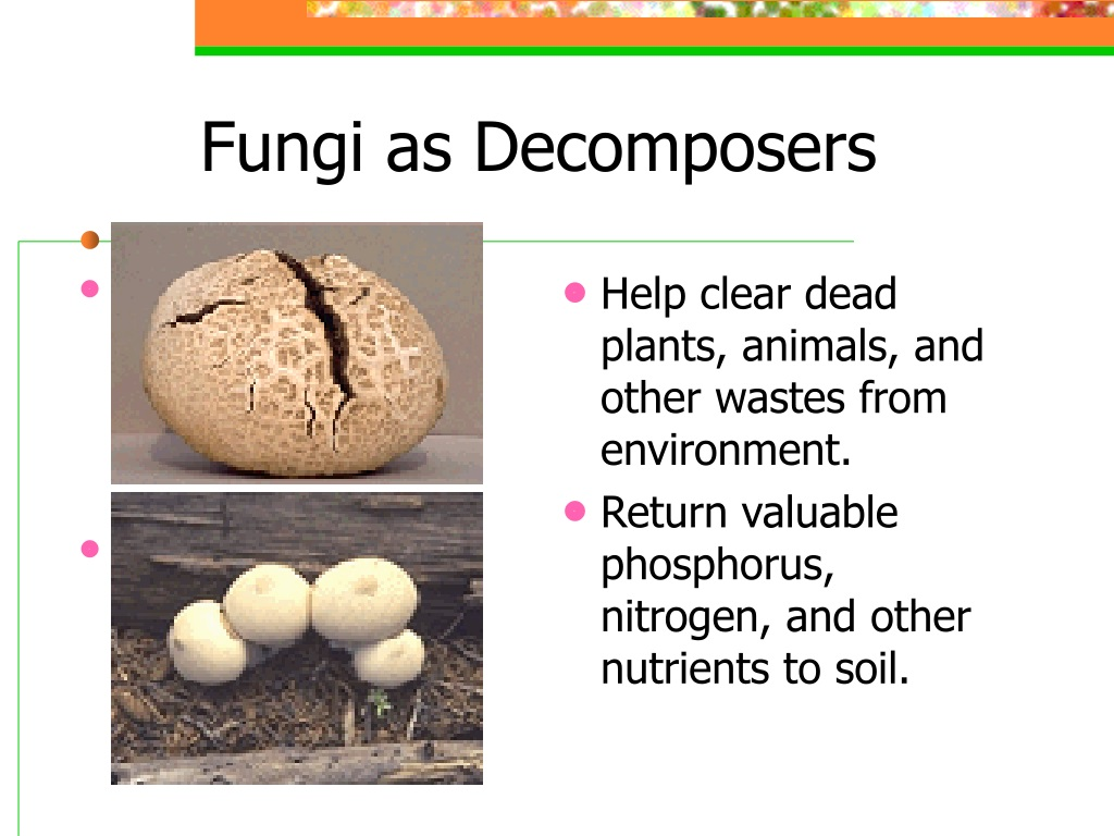 PPT - Fungus: PowerPoint Presentation, free download - ID ...