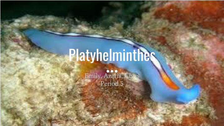 Platyhelminthes ppt tutorial