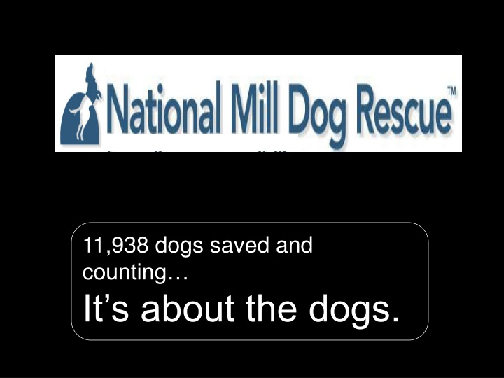 11 938 dogs saved and counting it s about the dogs n.