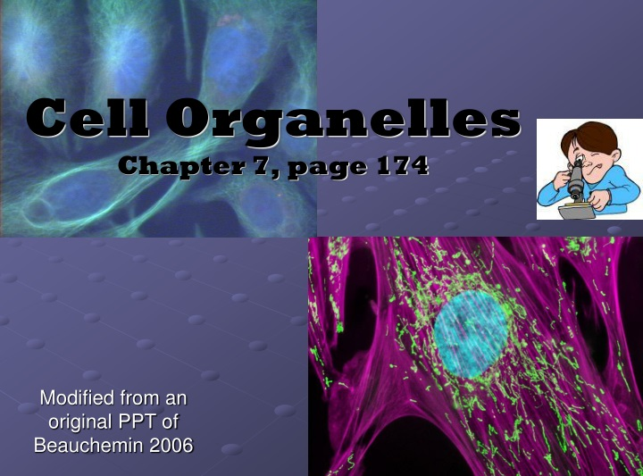 cell organelles chapter 7 page 174 n.
