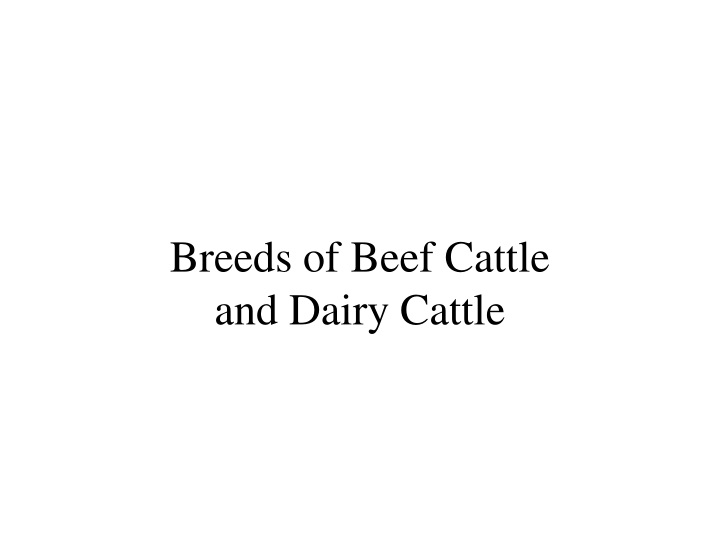 breeds of beef cattle and dairy cattle n.