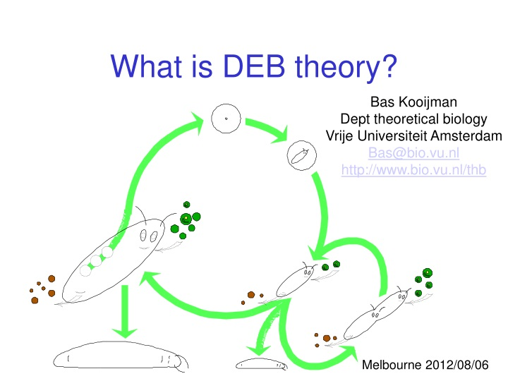 what is deb theory n.