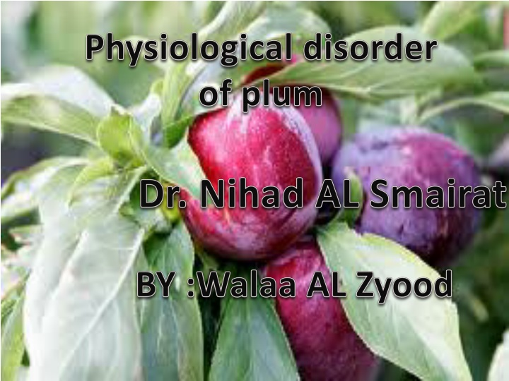 physiological disorder of plum n.