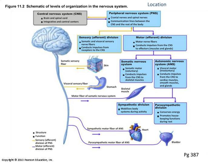 Ppt Figure 11 2 Schematic Of Levels