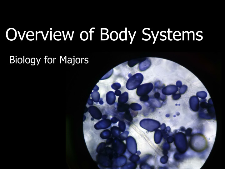 overview of body systems n.