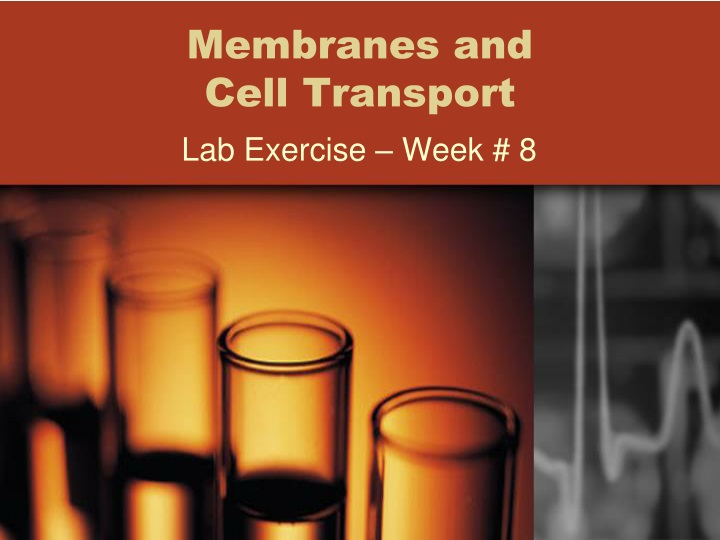 membranes and cell transport n.