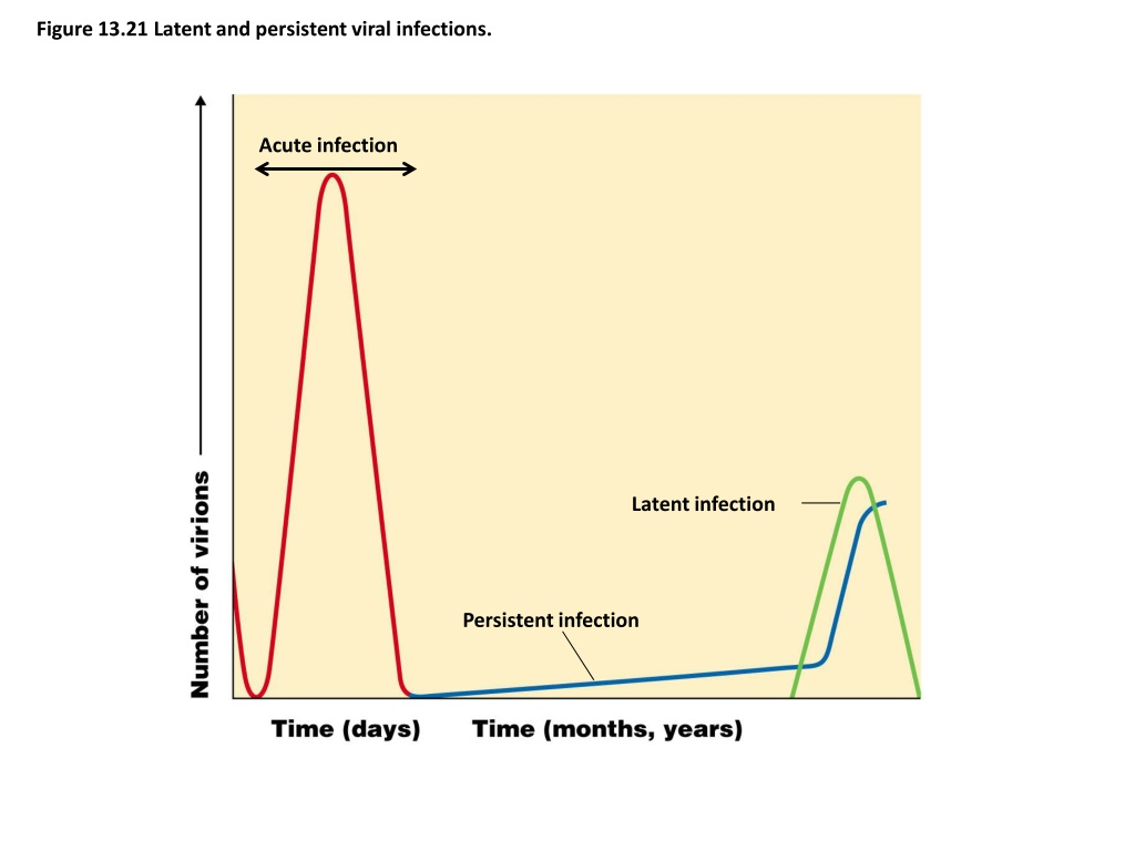 latent viral infection vs persistent viral infection