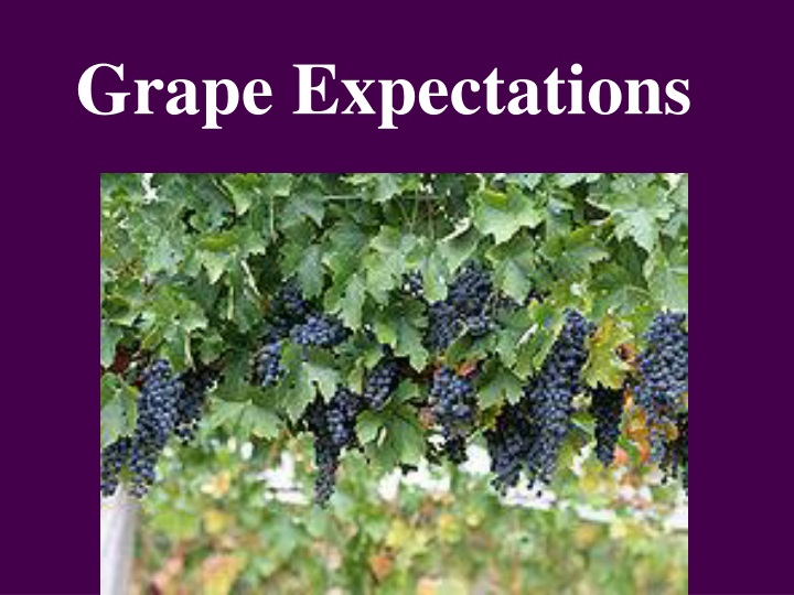 grape expectations n.