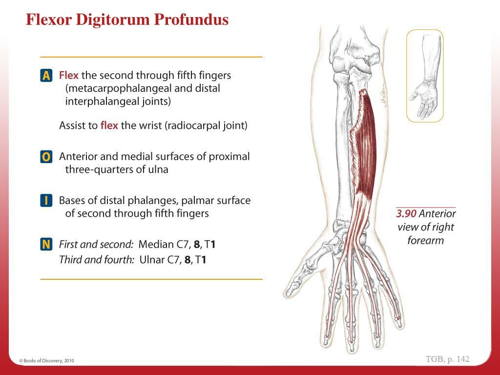22+ Aoin Anatomy Background