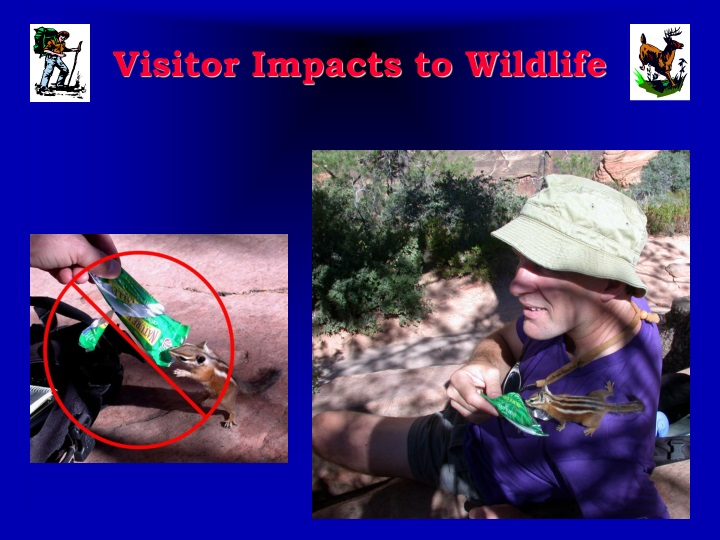 visitor impacts to wildlife n.