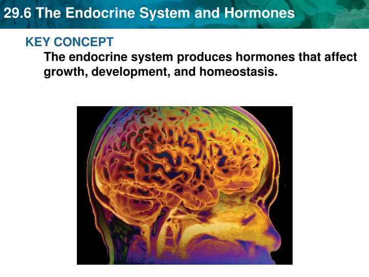 key concept the endocrine system produces n.