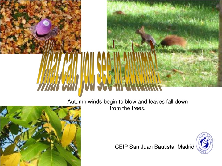 what can you see in autumn n.