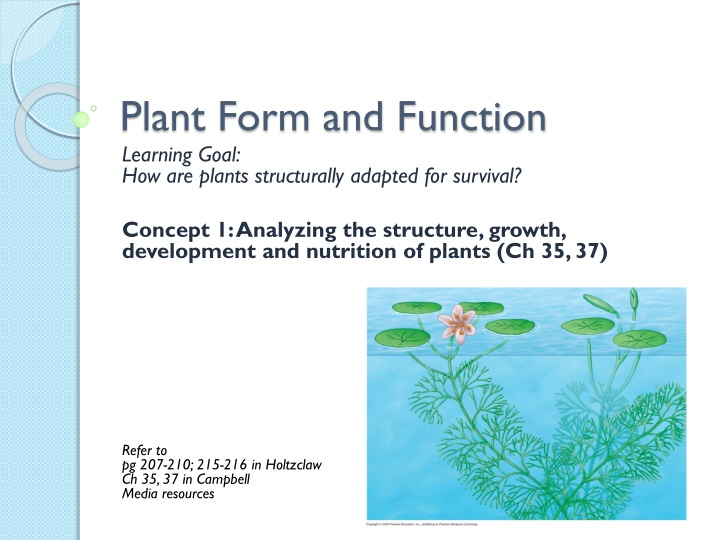 plant form and function n.