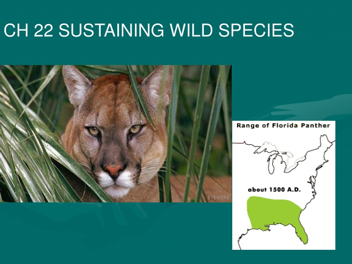 ch 22 sustaining wild species n.