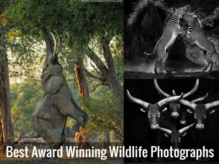 best award winning wildlife photography n.