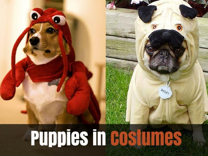 puppies in costumes n.