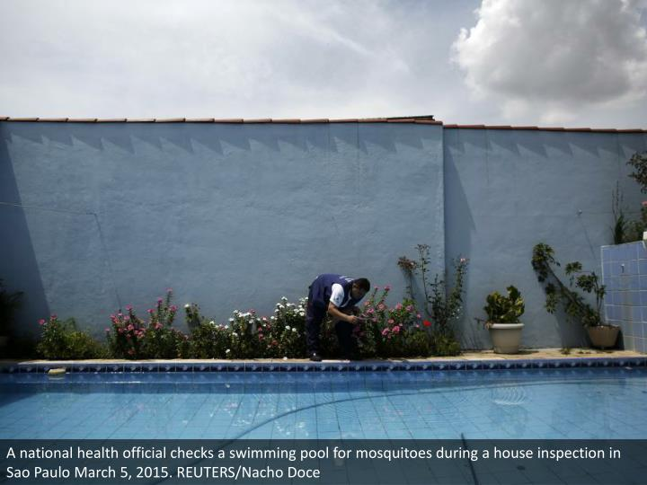 A national health official checks a swimming pool for mosquitoes during a house inspection in Sao Paulo March 5, 2015. REUTERS/Nacho Doce