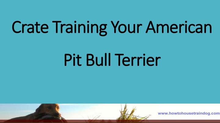 Crate training your american pit bull terrier