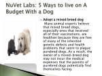 nuvet labs 5 ways to live on a budget with a dog5