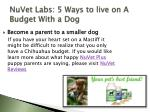 nuvet labs 5 ways to live on a budget with a dog6