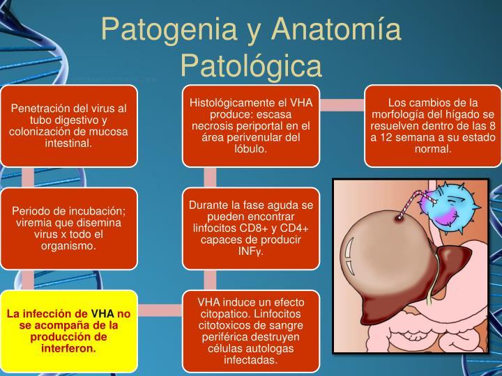 Patogenia y Anatomía Patológica