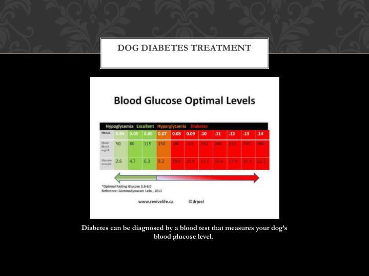 Dog diabetes treatment